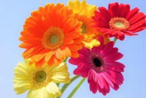 ヒナギク似た花
